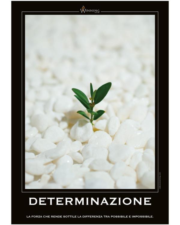 Determinazione - Piantina
