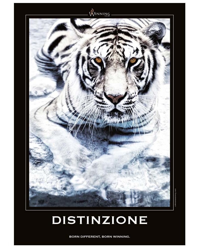 Distinzione - Tigre