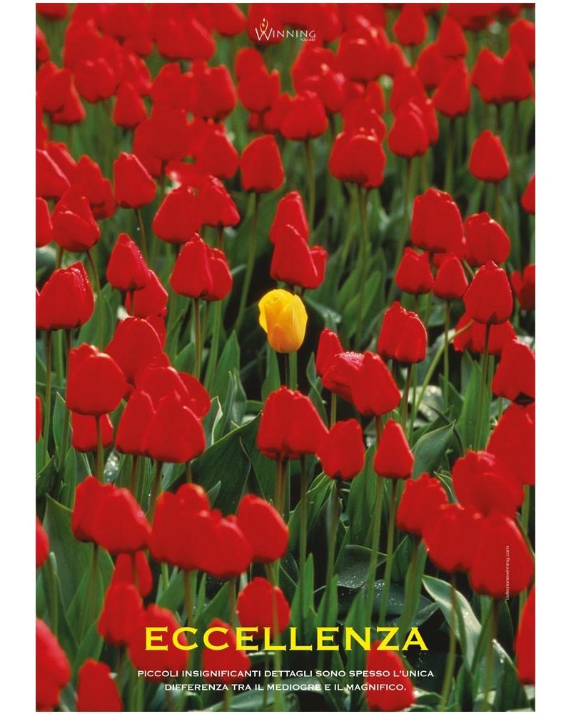 Eccellenza - Tulipano