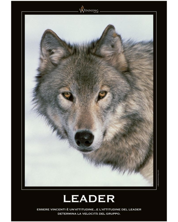 Leader - Lupo