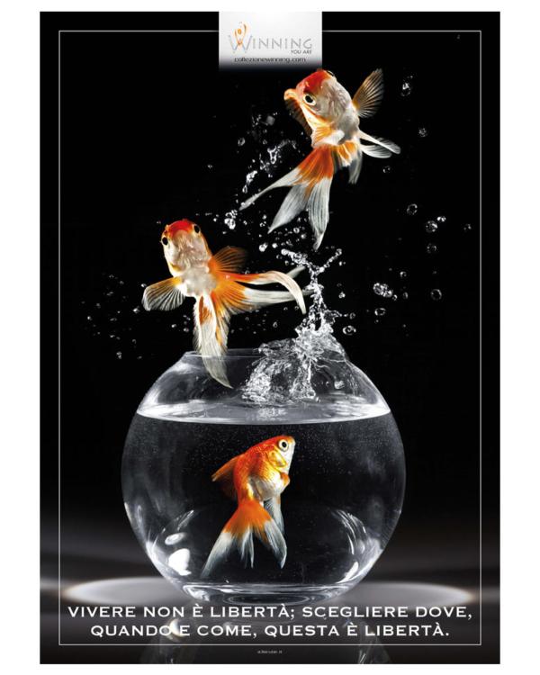 Pesci - Libertà