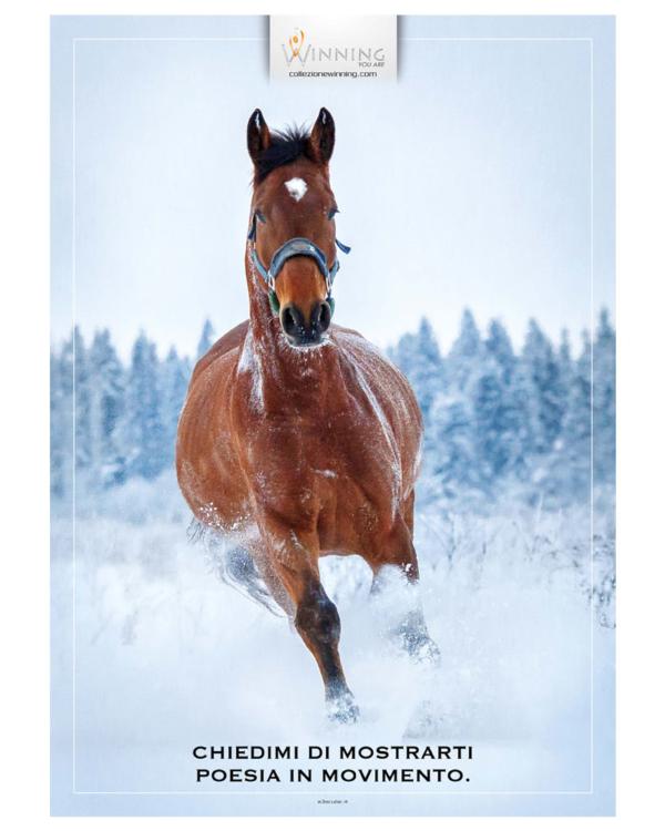 Equino - Movimento