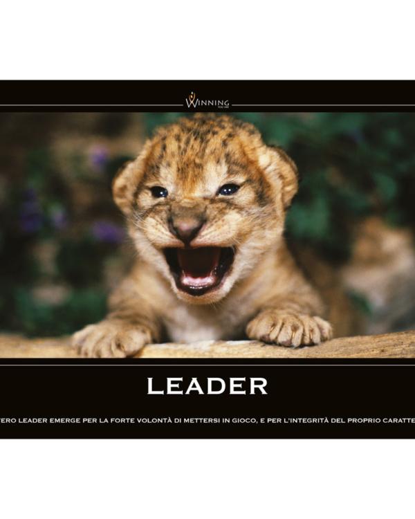 Leader - Leoncino