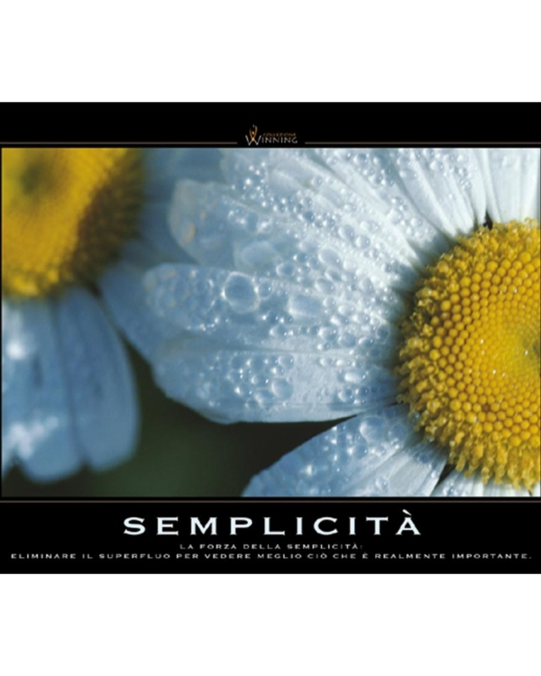 Semplicità - Margherite